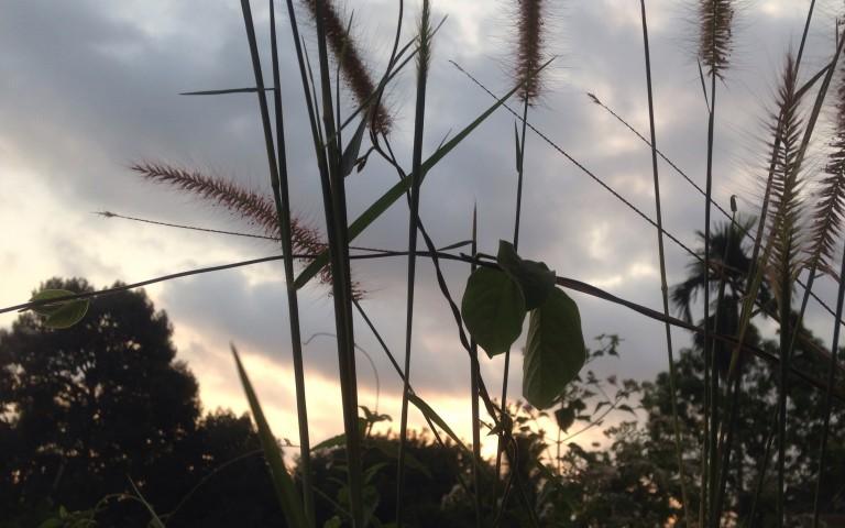 Прибрежных много трав