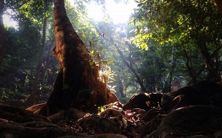 В лесах Канчанабури