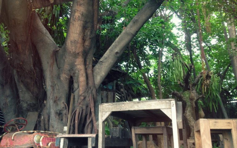 Бангкок древесный #1
