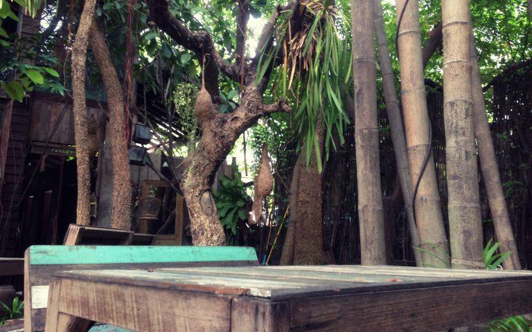Бангкок древесный #2