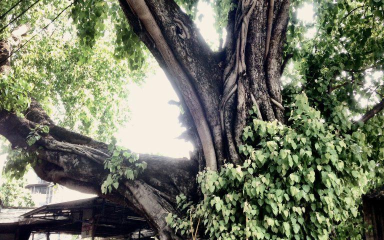 Мощное дерево