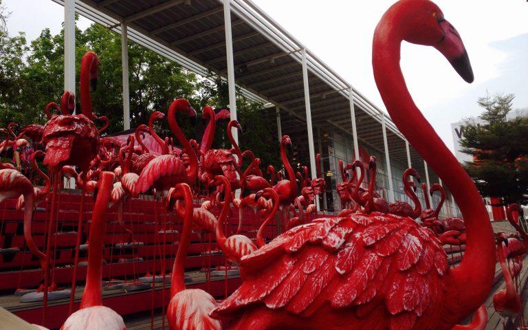 Огненные фламинго