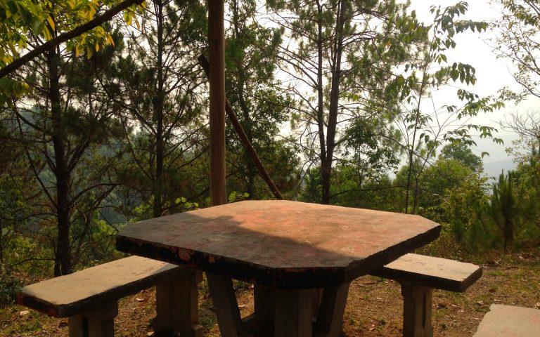 Место в реликтовом лесу