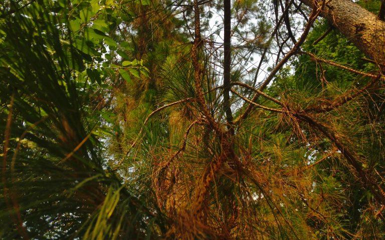 Реликтовый лес Северного Таиланда 2