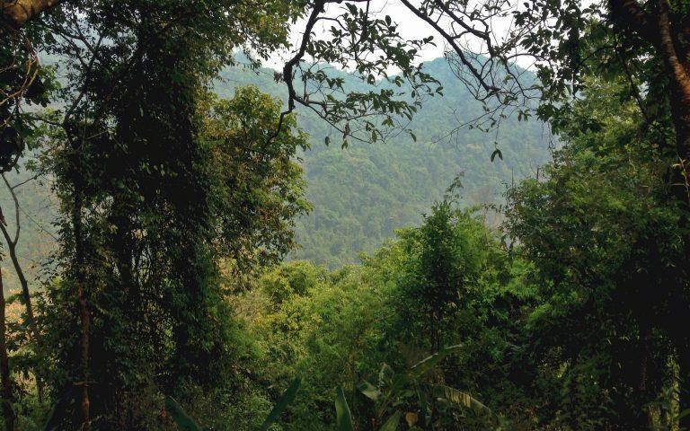 Реликтовый лес Северного Таиланда 1