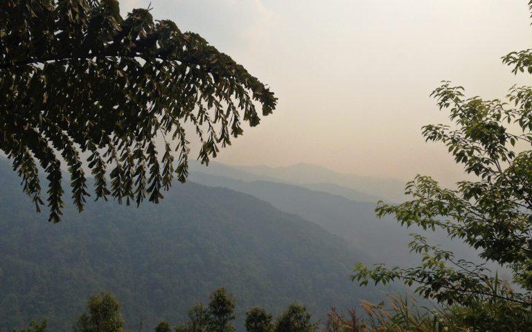 Реликтовый лес Северного Таиланда 3