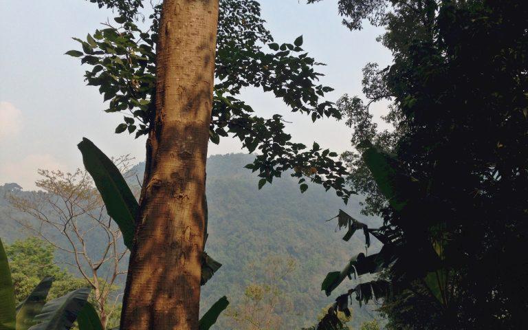 Реликтовый лес Северного Таиланда 4