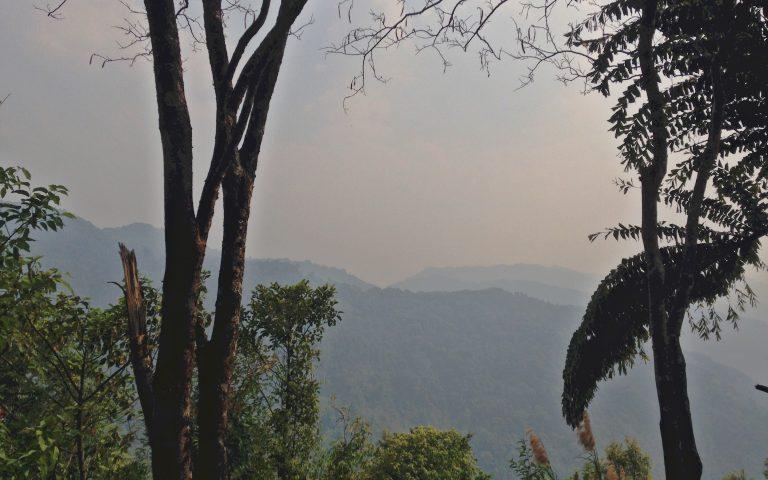 Реликтовый лес Северного Таиланда 7