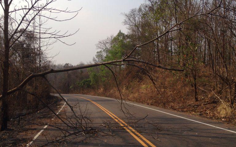 Упавшее дерево на дороге