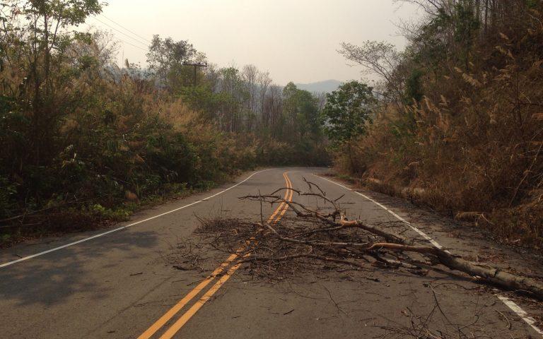 Дерево перекрыло часть дороги