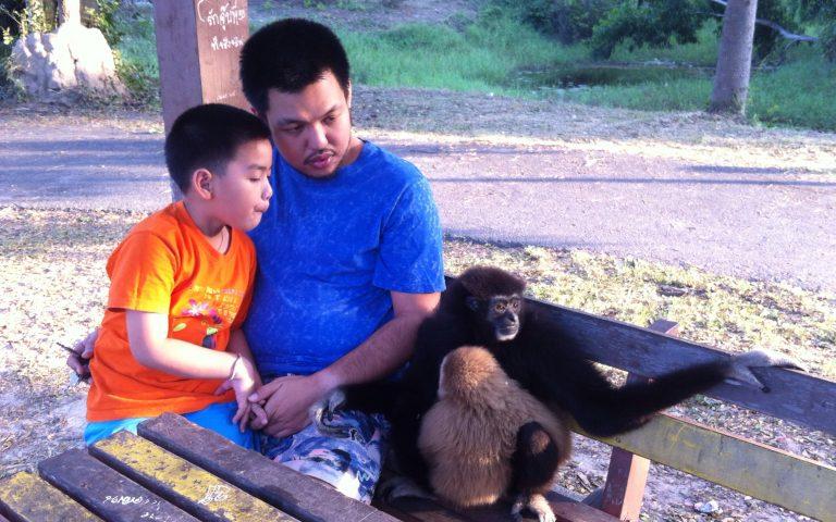 Ручные обезьяны в Чаамском парке