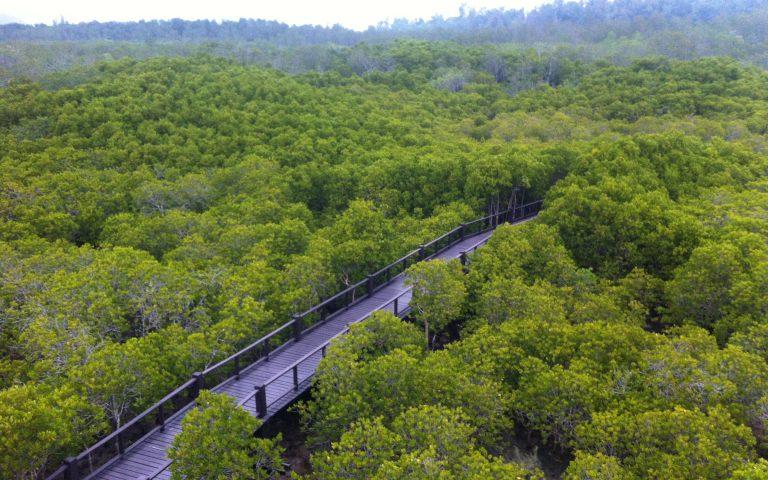 Мангровый лес 3