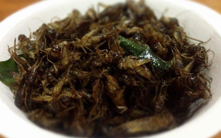 Тарелка насекомых на ужин