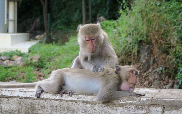 Тайский массаж под открытым небом