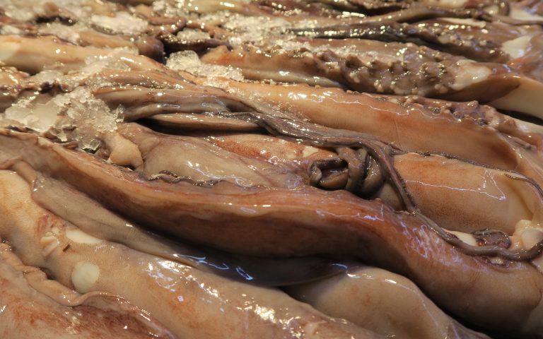 Щупальца гигантского кальмара