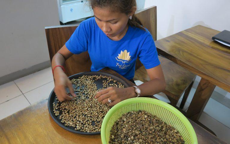 Зерна кофе, отобранные вручную
