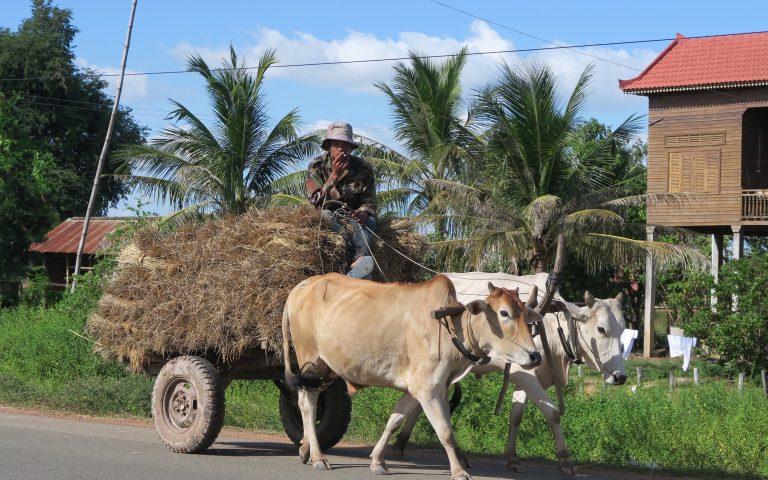 Коровья тяговая сила