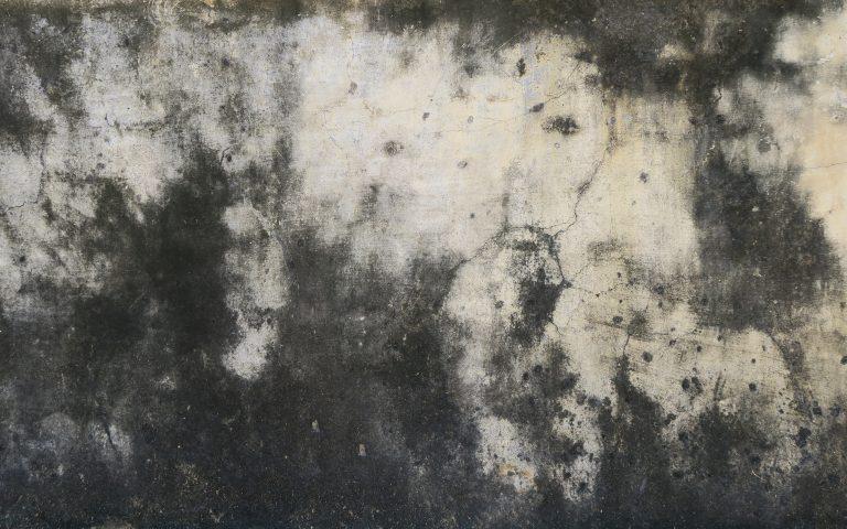 Проект «Бодхидхарма сидел». Стена №16