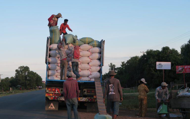 Уборка риса в Камбодже