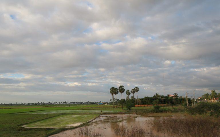 Рисовые поля Камбоджи