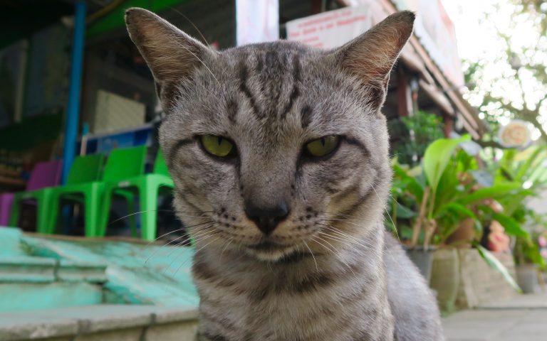 Этож кот