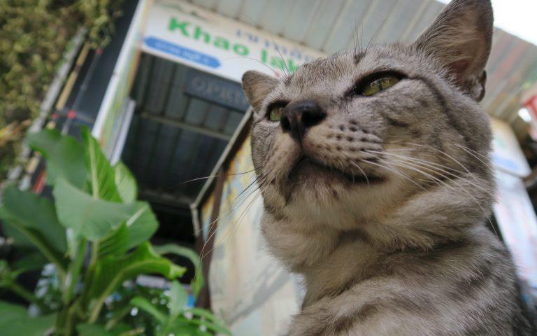Этож кот 3