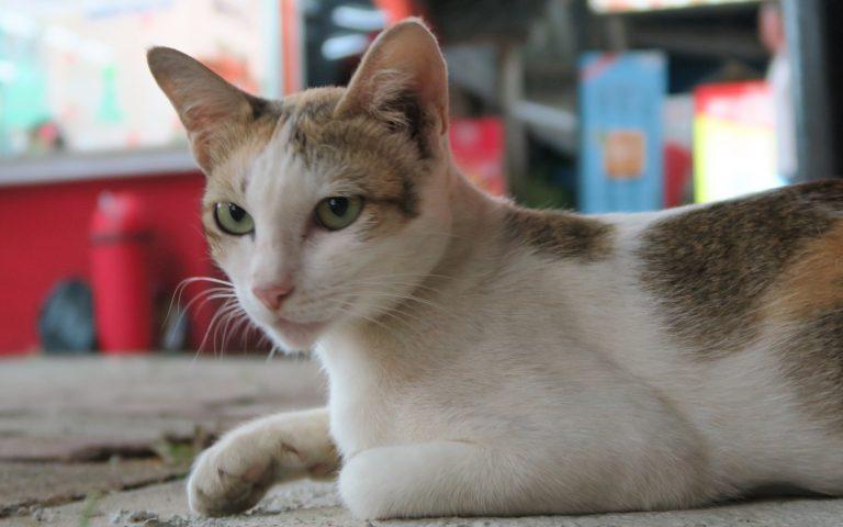 Этож кот 2