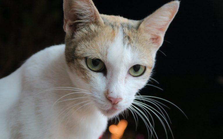 Этож кот 4