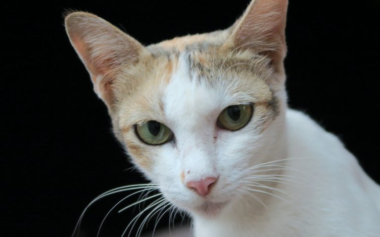 Этож кот 7