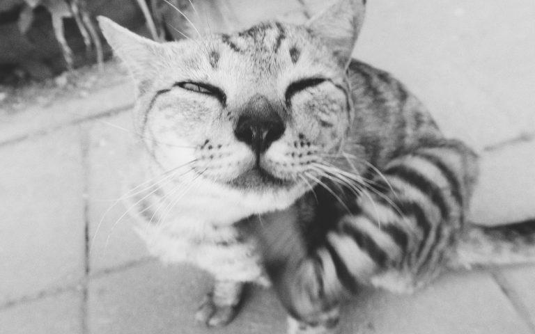 Этож кот 5