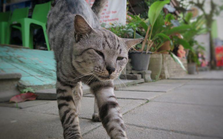 Этож кот 6