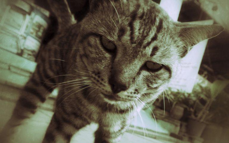 Этож кот 8