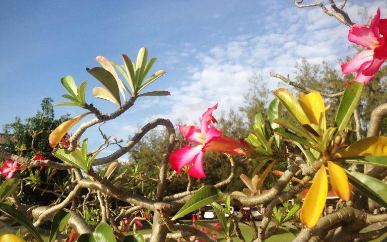 Цветочно-небные виды