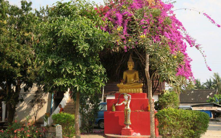 Будда и огромной высоты бугенвиллея
