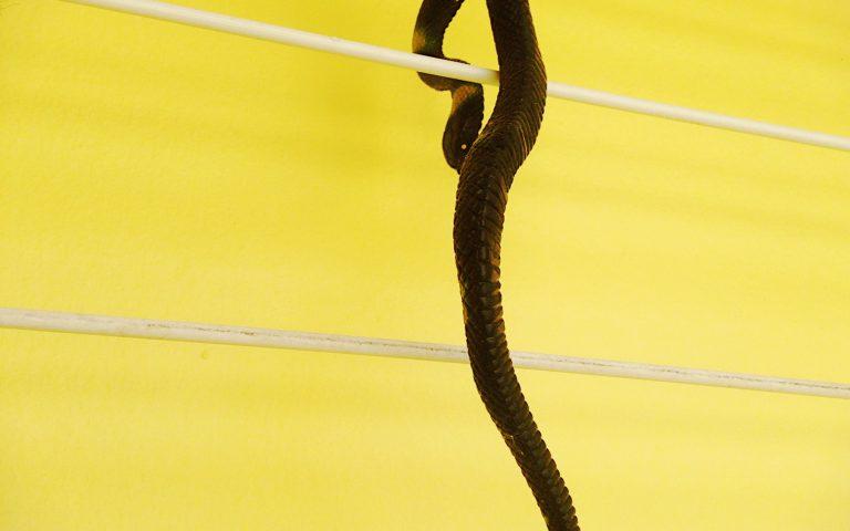 Пугающий образ змей