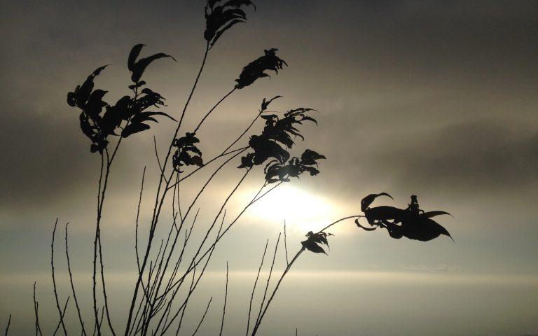 Горный ветер 2