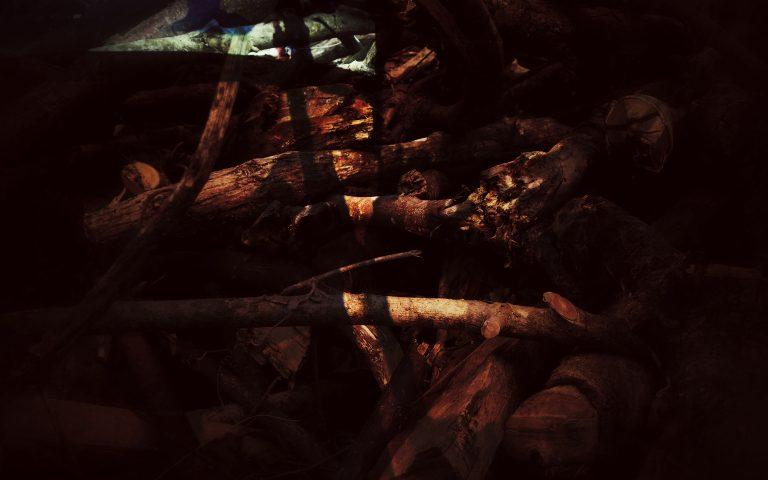 Лес исчезает 3