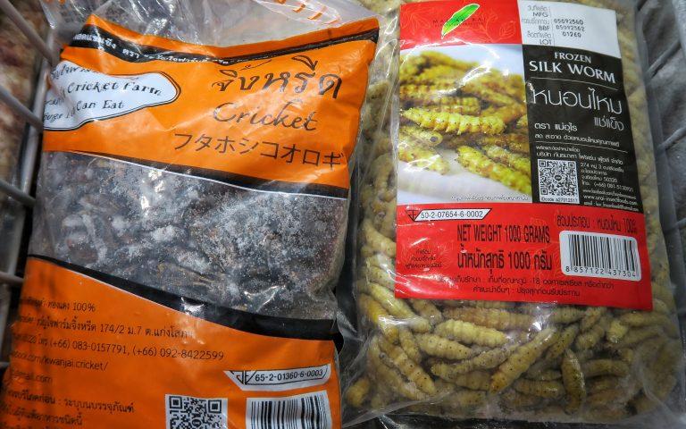 Полуфабрикаты: тутовые шелкопряды и сверчки