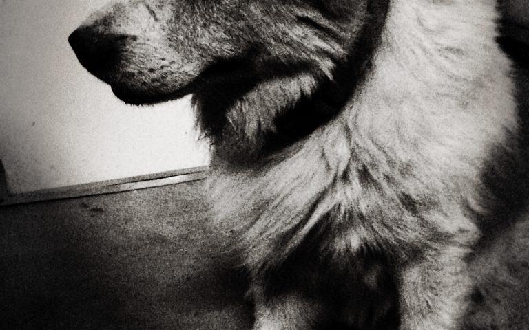 Если я скажу, что этот пёс добродушен