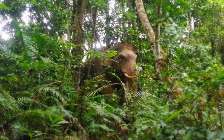 Забавные зверушки тайского леса