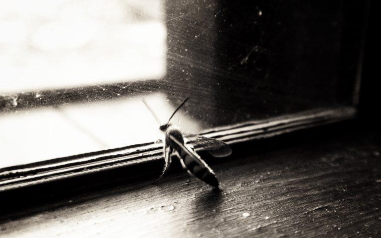 Нет, не муха
