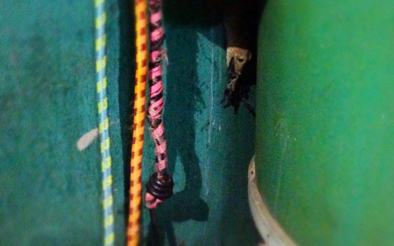 Схватка геккона и скорпиона