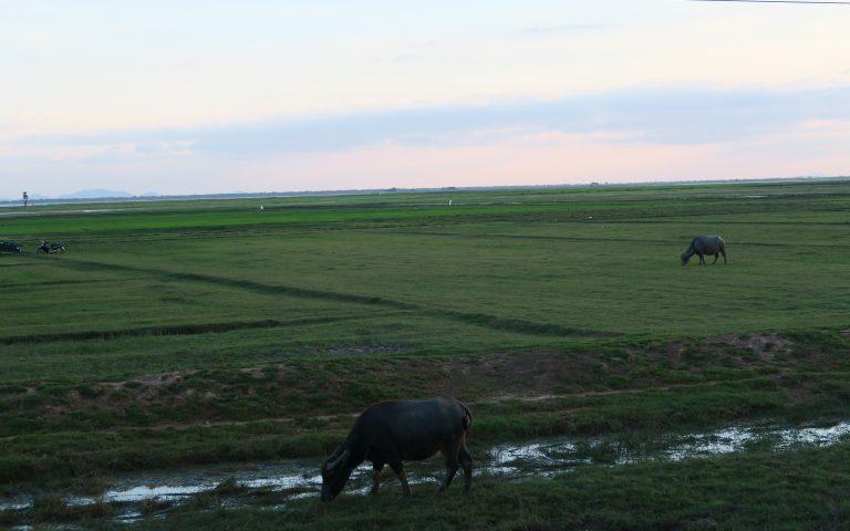 Камбоджийских полей обзор