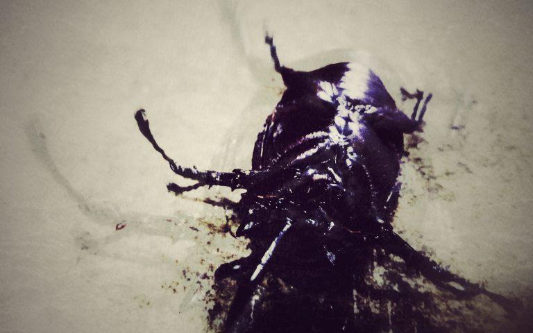 Хитрый жук