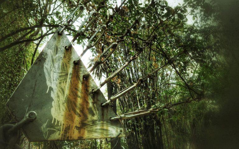 Инопланетяне в бамбуковой роще