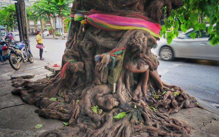 Церь-дерево мегаполиса