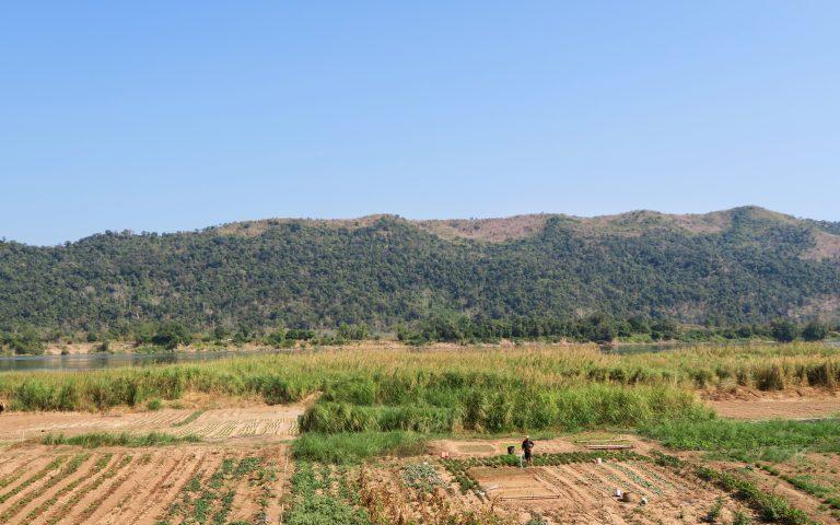 Огородик на берегу Меконга