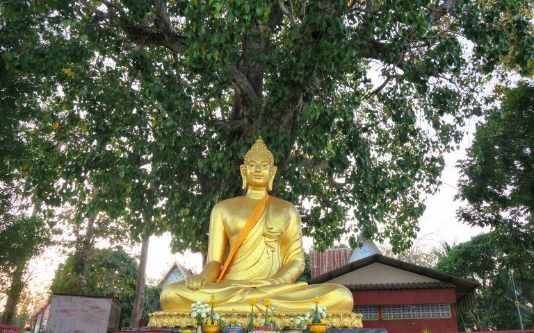Будда и большое дерево Khong Chiam