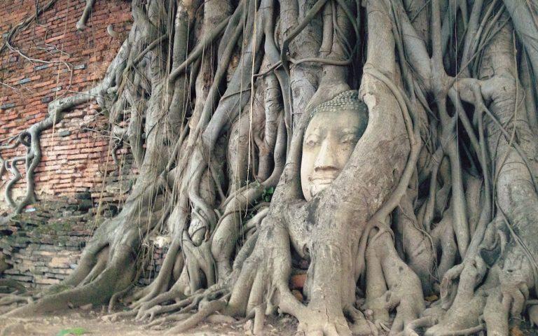 Будда лучший