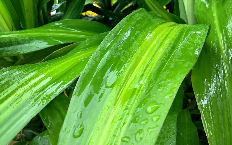 Сезон дождей 3